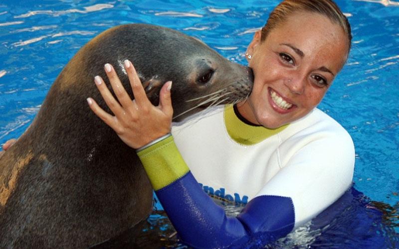Sea lions swim, Mundomar