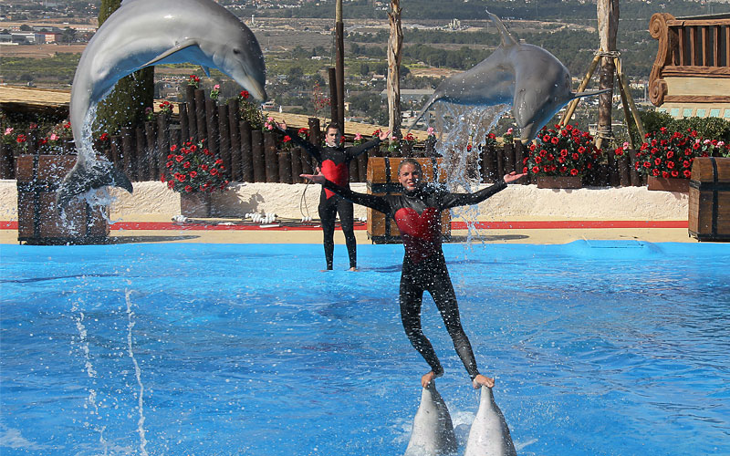 Dolphin Dancing, Mundomar. Benidorm